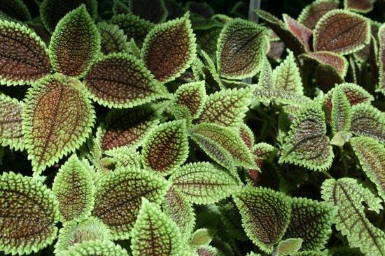 Jardin botanique et papillons en libert une superbe for Papillon jardin botanique 2015