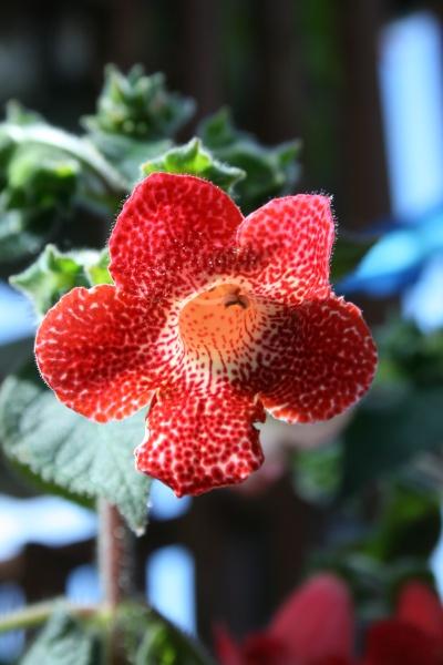 Fleur jardin botanique montréal